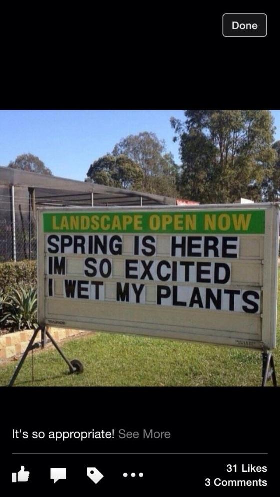 Spring - Wet Plants